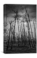 Dead Tree Forest, Canvas Print