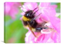 Bee On A Carnation, Canvas Print