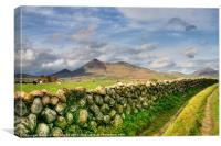 The Mournes in sunlight, Canvas Print