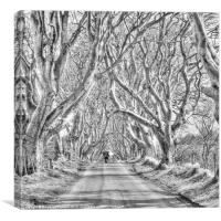 Nearly Home in the Dark Hedges, Canvas Print
