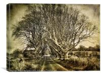 winter in the  Dark Hedges, Canvas Print