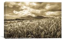 Timeless Mourne Harvest, Canvas Print