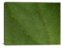 Leaf closeup , Canvas Print