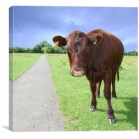 How Now Brown Cow , Canvas Print