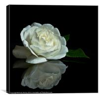 White Rose Reflected, Canvas Print