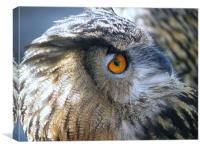 eagle owl 2, Canvas Print