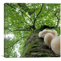 Tehidy Woods: Tree with Porcelain Cap Fungus, Canvas Print
