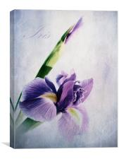 Spring Bloom, Canvas Print