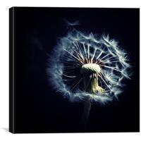 Dandelion Blowing In The Wind, Canvas Print