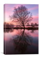 Tree on the River Bure, Canvas Print
