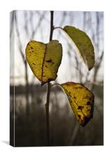 3 final leaves of Autumn, Canvas Print