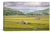 Buttercups in Swaledale, Canvas Print