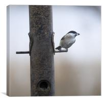 Marsh Tit with a sunflower seed, Canvas Print