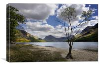 Tree on Buttermere, Canvas Print