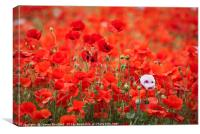 A Mass of Poppies, Canvas Print