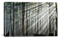Light in the forest, Canvas Print