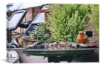 Twin Robins in HDR, Canvas Print