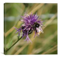 Bumble Bee Square, Canvas Print