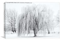 Winter Willow, Canvas Print
