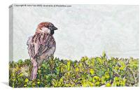 Sparrow - Landscape Version, Canvas Print