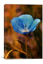 Flower Blue, Canvas Print