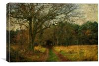 Enter The Woods, Canvas Print