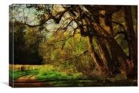 Blickling Woods 9, Canvas Print