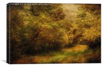 Blickling Woods 13, Canvas Print