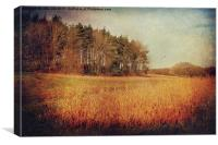 Norfolk Field 21, Canvas Print