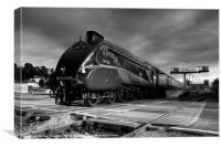 Bittern at Exeter, Canvas Print