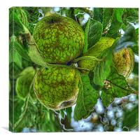 Fruit of the Orchard, Canvas Print