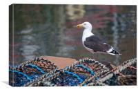 Greater black backed gull, Canvas Print