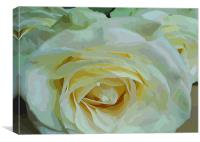 Roses are 3, Canvas Print