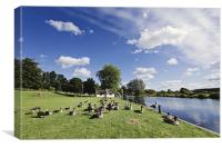 Sun Bathing Geese in Coltishall, Canvas Print
