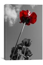Wild Poppy Worms Eye View Colour Popping, Canvas Print