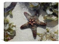 Starfish on the coral reef, Canvas Print