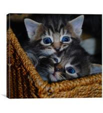 Kittens - Sibling Rivalry, Canvas Print