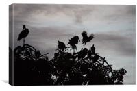 Nesting For The Evening, Canvas Print