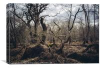Twisted gnarled tree branches along the Nar Valley, Canvas Print
