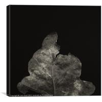 Project Decay. Leaf, Canvas Print