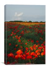 Church and field of poppies in evening light., Canvas Print