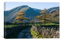 Larch trees and remote road to Thorneythwaite Farm, Canvas Print