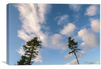 Evening sky and Pine trees., Canvas Print