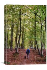Male walking his dog through autumnal woodland. No, Canvas Print