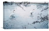 Two swans on the surface of a frozen lake. Norfolk, Canvas Print