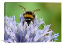 Bee on a Echinops, Canvas Print