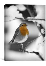 ROBIN IN THE SNOW (1), Canvas Print
