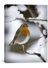 ROBIN IN THE SNOW (2), Canvas Print