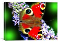 The Peacock Butterfly 3, Canvas Print