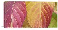 Autumn colour range, Canvas Print